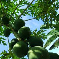 Arboretum Aux Milles Fruits
