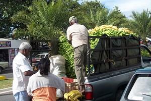 Bananes de Guadeloupe