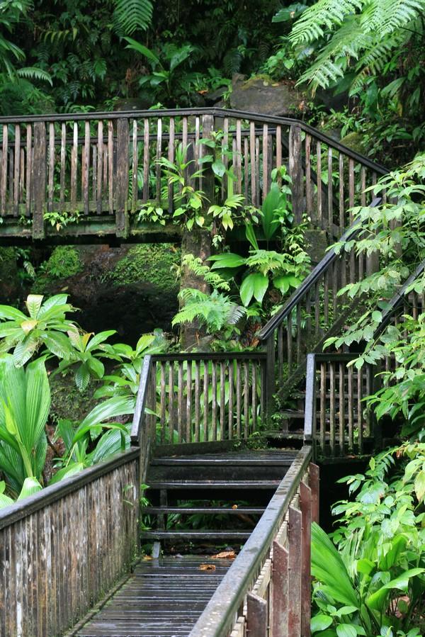 Forêt en Guadeloupe