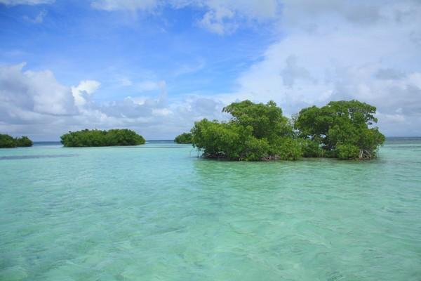 Mangrove Grand cul de sac marin