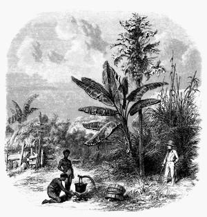 Code noir, escalavage en Guadeloupe