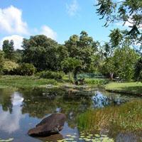 Jardin d'eau à Goyave