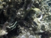 bleu-blanc-vert-plongee-barriere-corail