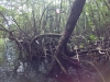 mangrove-grand-cul-de-sac-marin