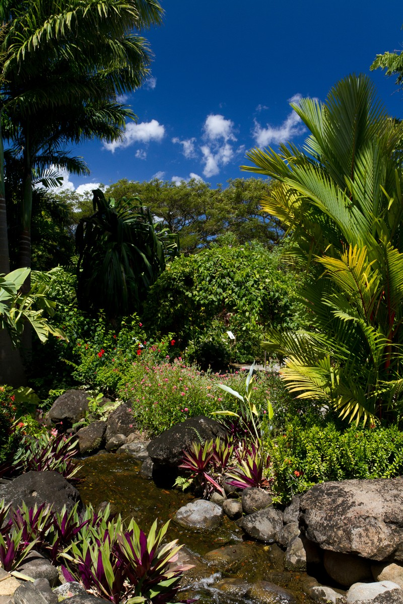Jardin botanique de deshaies terres de guadeloupe - Jardin botanique guadeloupe basse terre ...