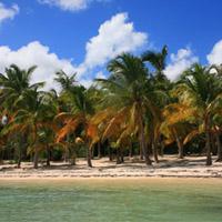Plage de l'Anse du mancenillier