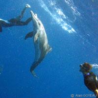 Plongée en Guadeloupe avec Eden Plongée