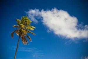 réchauffement climatique en Guadeloupe