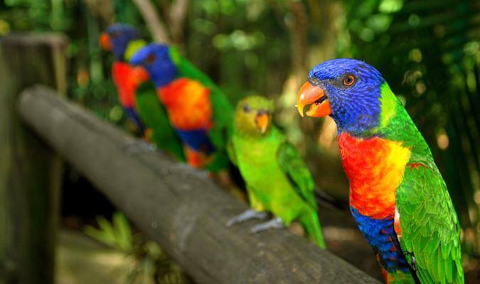 Parcs Floraux et animaliers en Guadeloupe