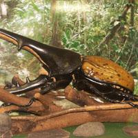 Galerie des plus beaux insectes du monde
