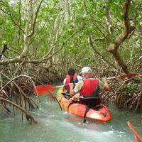 Kayak et Canyon en Guadeloupe